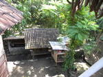 Balinese Animals