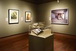 Bodies in Conflict: From Gettysburg to Iraq, Image 13 by Schmucker Art Gallery