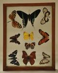 Insects by Devin N. Garnick